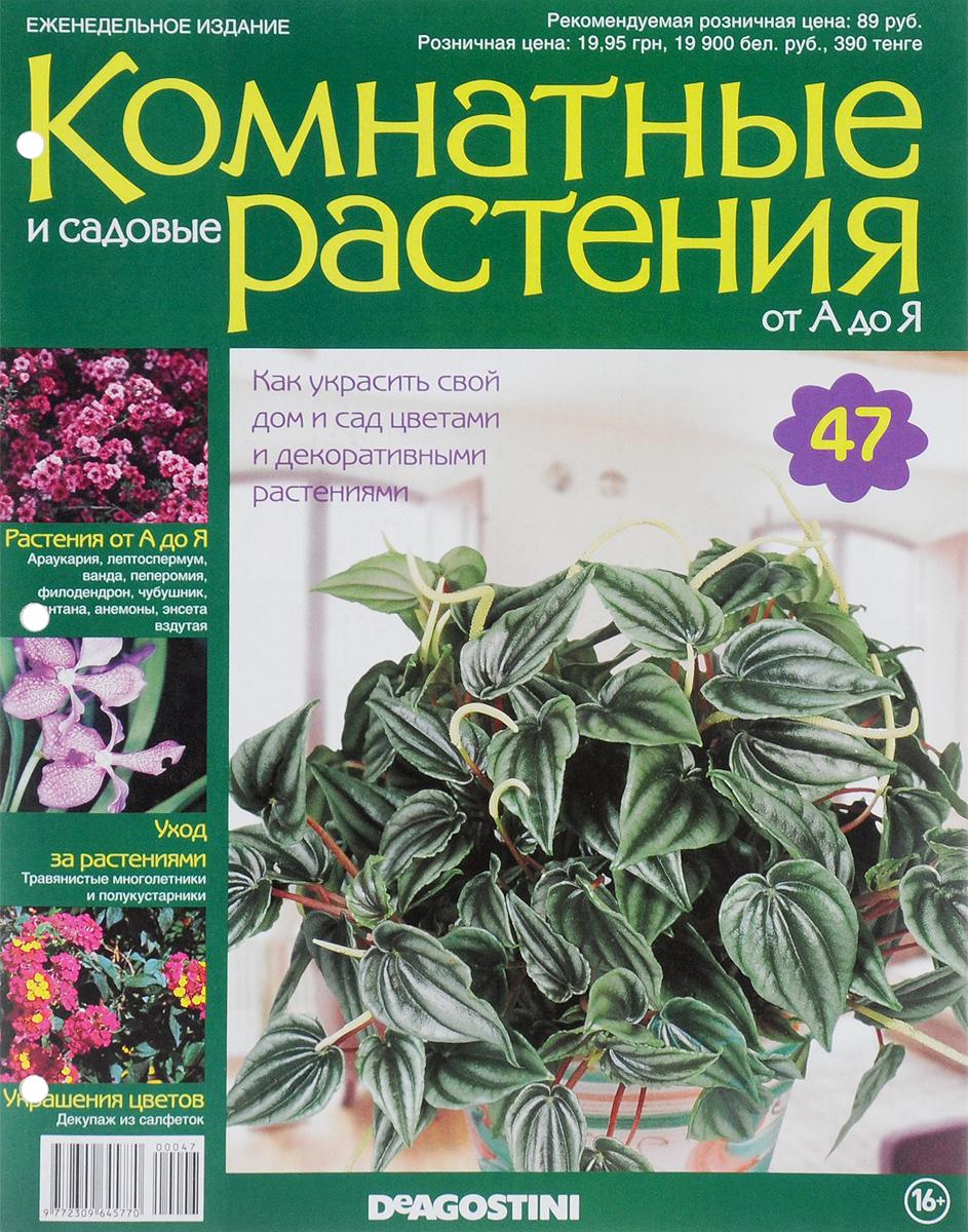 Каталог открытки комнатные растения