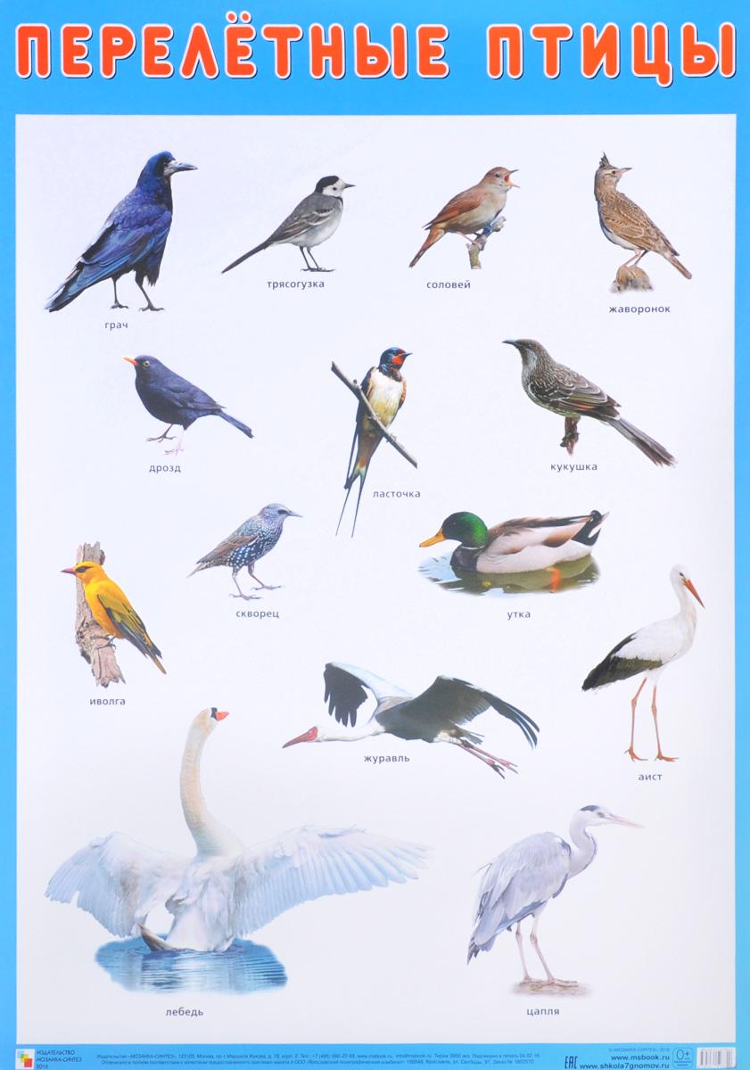 Названия с картинками всех птиц