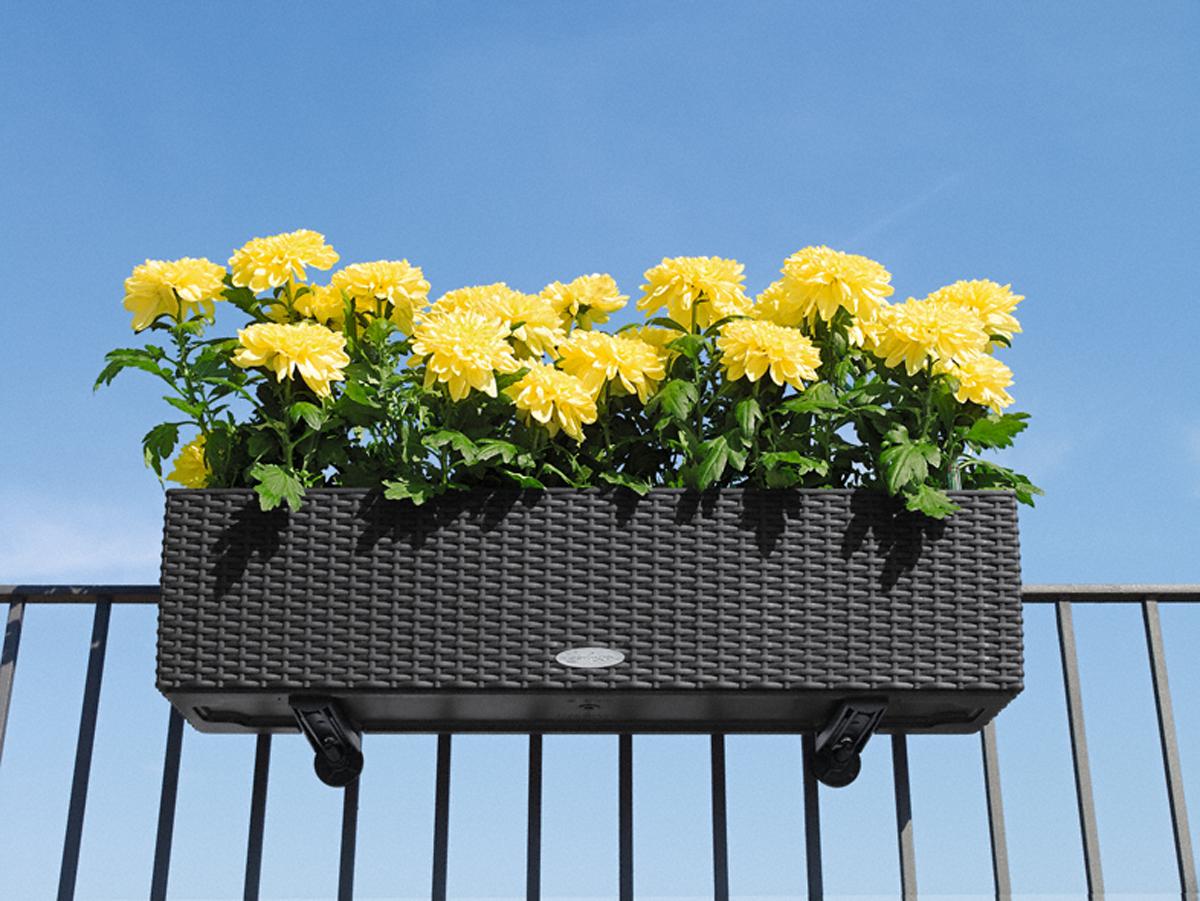 Цветок на балкон который свешивается стеной..