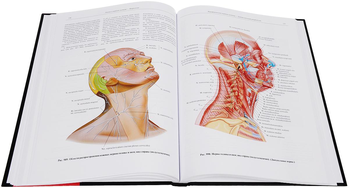 Анатомия человека в двух томах - Сапин М.Р. - Учебное пособие