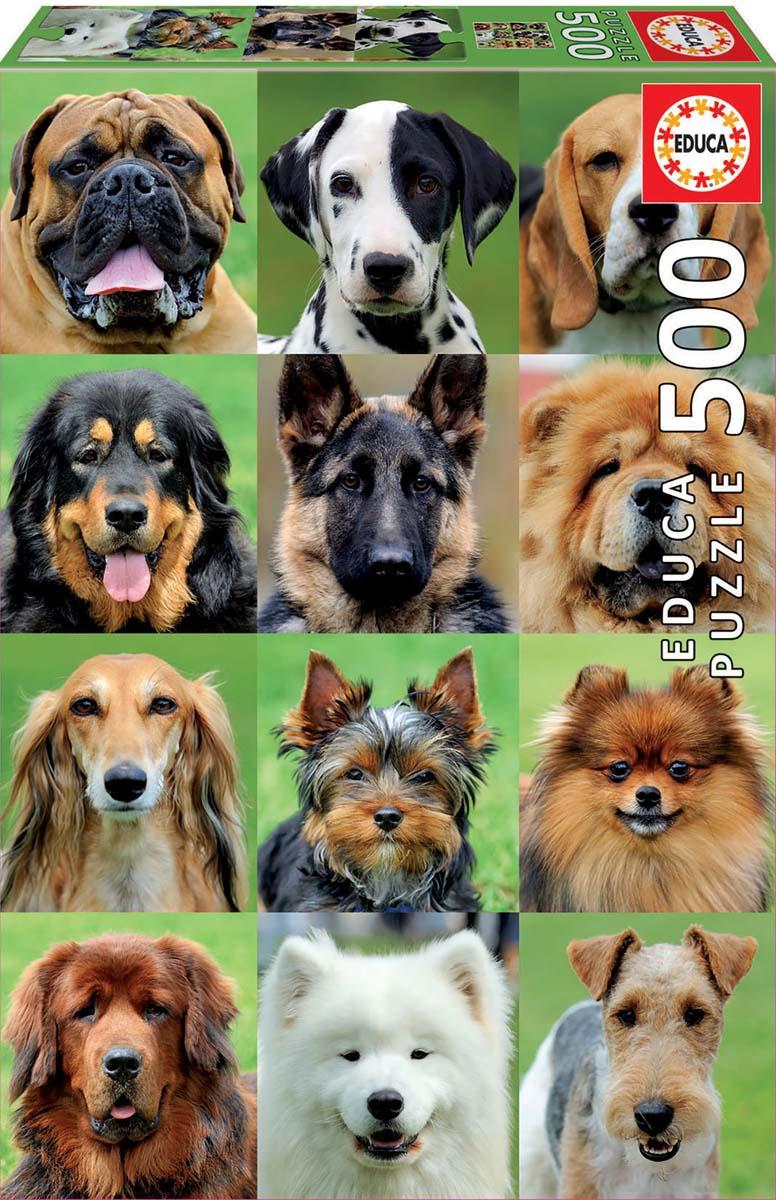 картинки средних собак название пределами италии