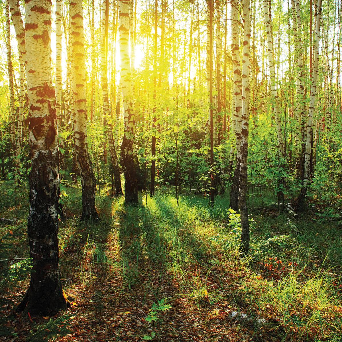 красивые картинки русского леса все
