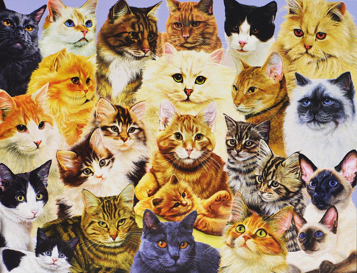 Открытка много котов, нового
